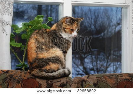 cat sitting on back of sofa near the window