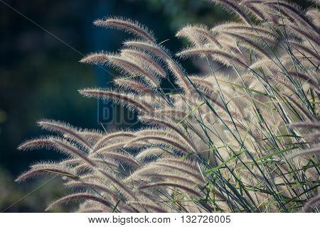 Beautiful Grass Flower