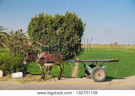 Empty donkey cart alongside road in Valley of Kings, Egypt.