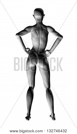 Vector illustration of sexy nude girl. 3D. Polygon. Isolated. EPS 8.