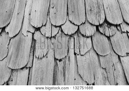 Monotone Gray Texture of old shingle Roof top view
