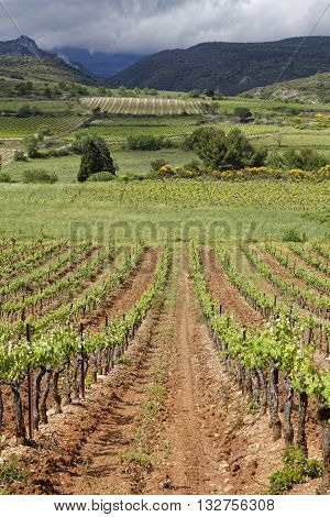 Corbieres Vineyard Landscape. The wines from the region tend to be just as varied as the terroir