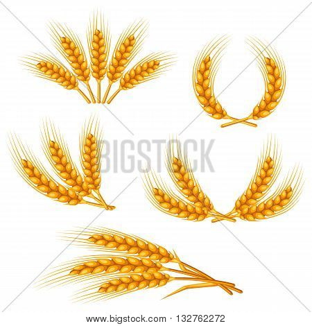 Design elements with wheat. Agricultural image natural golden ears of barley or rye. Objects for decoration bread packaging, beer labels.