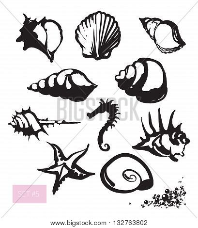 Vector illustration. Beautiful shell set. Black on white background.