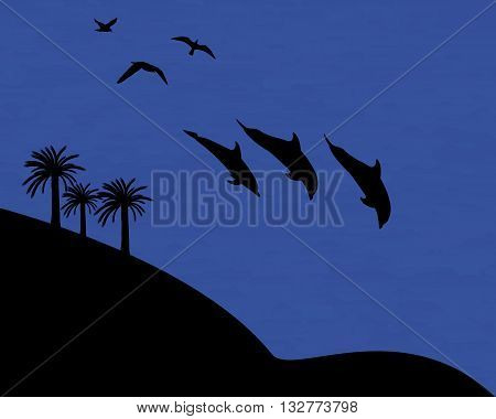 wildlife dolphins palm seagull water evening time