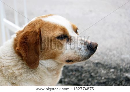 A dog with a calm face, photographed in profile