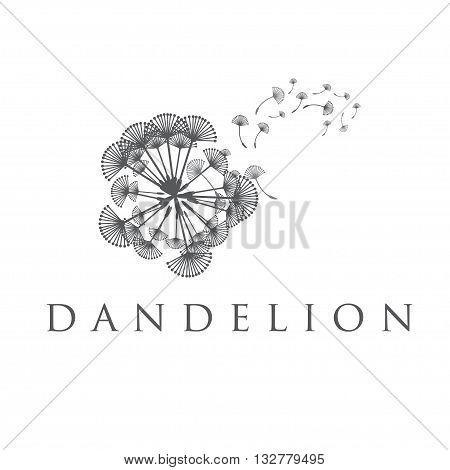 Illustration Of Concept Dandelion. Vector
