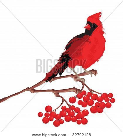 Merry christmas card. Red bird cardinal on branch with berries.