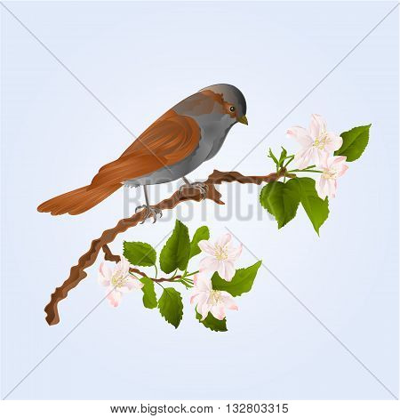 Sparrow bird on a branch of an apple tree wildlife bird vector illustration