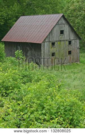green mildew covers the side of an old barn in a setting of green trees and weeds