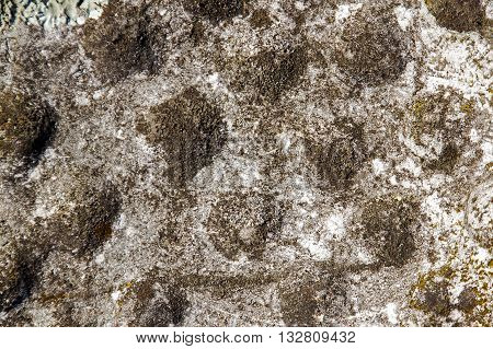 Extreme Closeup Texture Of Lichen Fungus And Moss