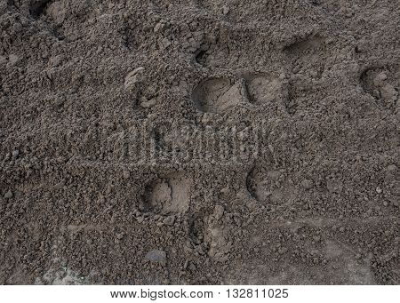 Hoof prints in the Dirt track background image