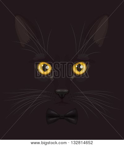 Muzzle of short-haired black cat with big yellow eyes and with stylish black bow-tie on neck, at dark background