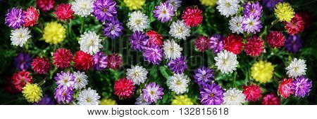Freshness flowers asters on blured background. Flowers collage.