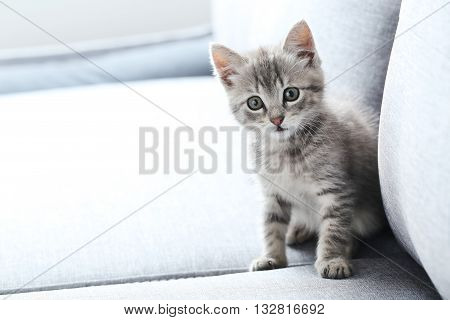 Beautiful Little Cat On A Grey Sofa