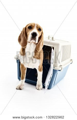 Cheerful dog is escaping from portable cage. He is standing and looking forward with curiosity. Isolated