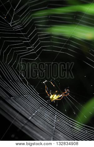 Spider arachnid sits in its lair on black background