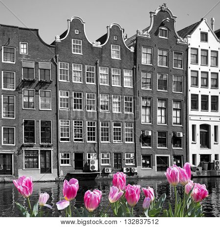 Black and white image of Amsterdam city with pink tulips on front