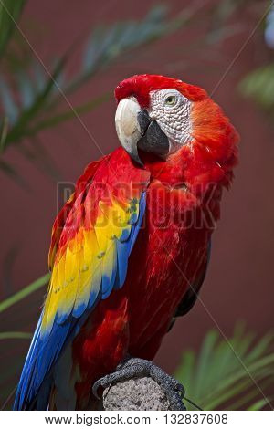 Closeup of a colourful tropical parrot taken in Cancun, Mexico