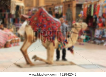 Camel For Walks, Riding Tourists