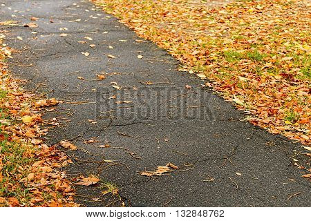 Asphalt sidewalk with many wilted leaves on the side