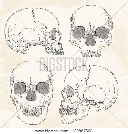 Human skull hand drawn vintage sketch vector illustration