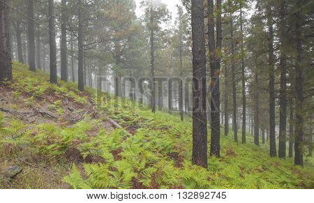 Inland Gran Canaria, Foggy Day