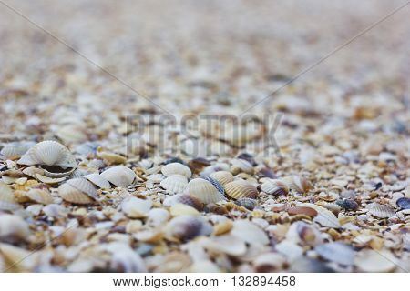 Natural sand and shells background macro close-up low depth of field