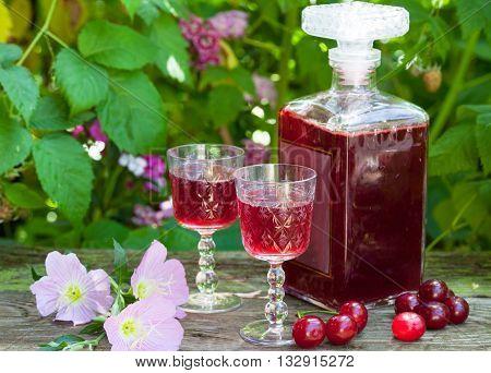 Maraschino liqueur with fresh cherries in the garden