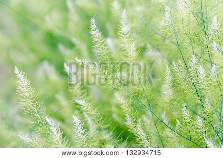 Background Small Green Leaves