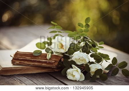 Dogrose lies on the open old books on a wooden table