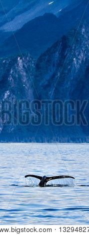 Vertical Panoramic Photo Of A Whale Tale Above The Water With Alaskan Mountains In The Background. W
