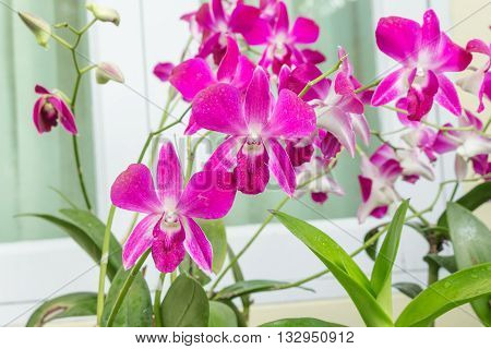 purple orchid flowers the natural in the garden. select focus purple orchid Blur blurred background.