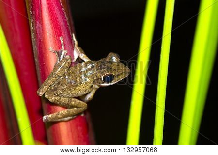 Frog perched on a tree ready to jump.