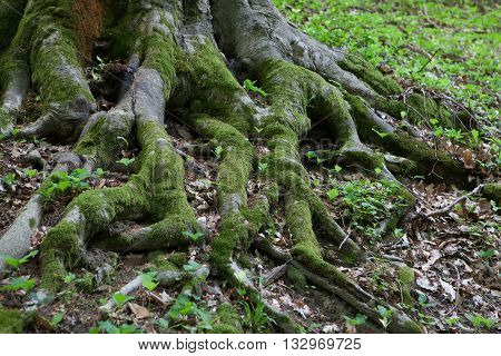 the roots of a large tree covered in green moss