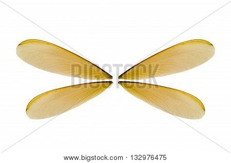 Extreme macro close up of the insect wing on white background