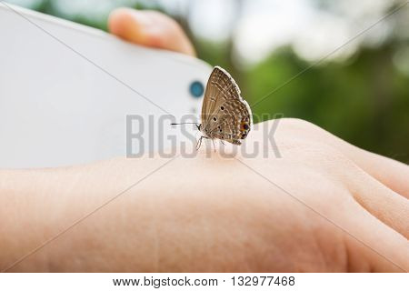 Lovely Butterfly Suddenly Catch Hand With Blurred Smartphone And Finger Shooting Photo At Background