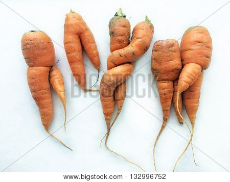Group of odd shaped carrots on white cardboard