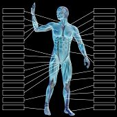 3D  illustration of a concept or conceptual male or human anatomy, a man with muscles and textbox isolated on black background poster