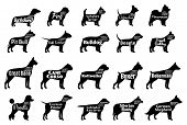 Vector dog breeds silhouettes collection isolated on white. Dog icons collection for cynology pet clinic and pet shop. Dog breeds names and personality description poster