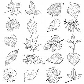 black and white leaf vector line pattern