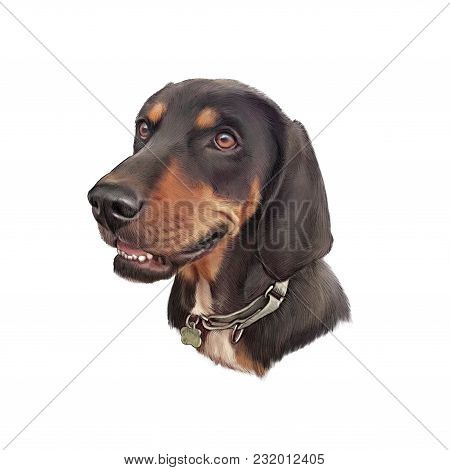Portrait Of Dachshund. Handsome Hunting Dog Isolated On White Background. Animal Collection. Hand Pa