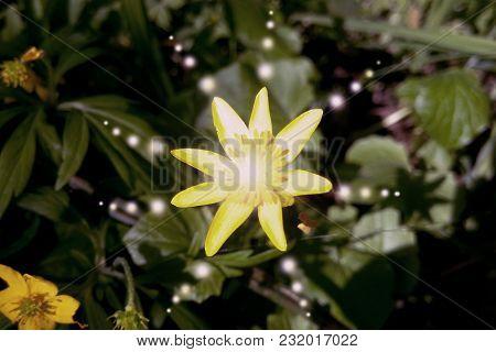 Balls Patterns Of Light On The Yellow Flower Prana Life Toned Image