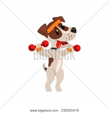Cute Jack Russell Terrier Athlete Exercisng With Dumbbells, Funny Sportive Pet Dog Character Doing S