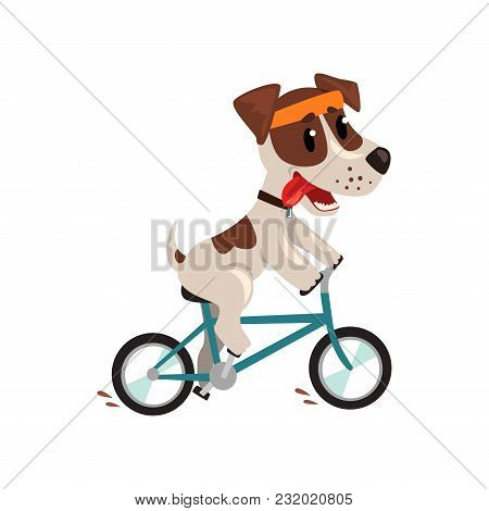 Cute Jack Russell Terrier Athlete Riding A Bike, Funny Sportive Pet Dog Character Doing Sports Vecto