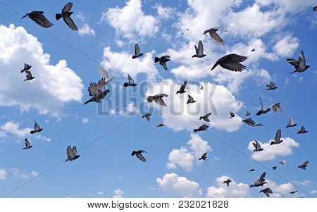 Many Pigeons Flying To The Blue Sky.