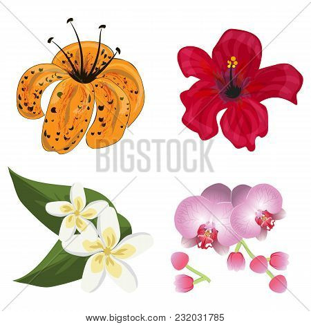 Flower Tropic Flora Vector. Hawaiian Hibiscus And Floral Exotic Lily Plumeria Aloha Plants Isolated