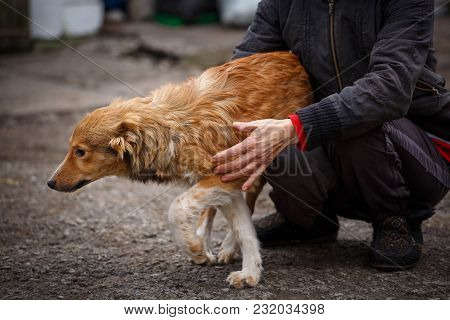 A Dog Is A Friend. A True Friend. Help For Stray Dogs. Veterinarians And Animals.