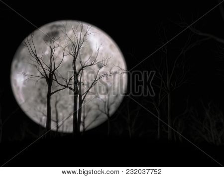 Woods On Front Of Moon. 3d Illustration Of Night Scene