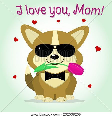 Puppy Corgi Keeps A Pink Tulip, Cartoon Style. Congratulations. Happy Mother's Day.
